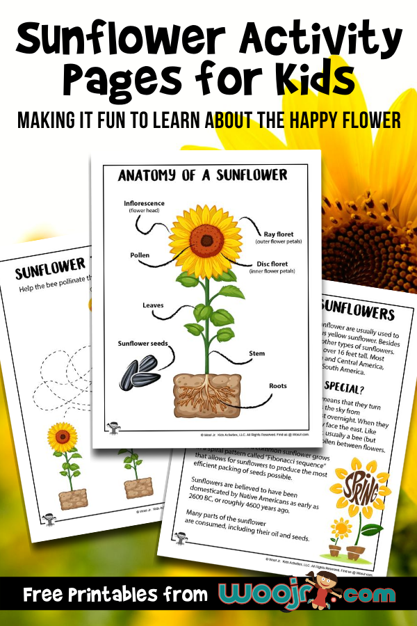 Sunflower Activity Pages for Kids