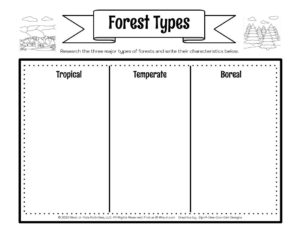 Rainforest Lesson Types of Forest Worksheet