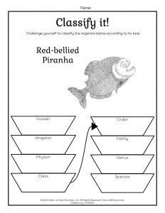 Animal Taxonomy Lesson