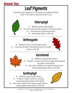 Fall Leaf Pigments Teaching Worksheet