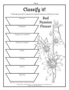 Plant Taxonomy Worksheet