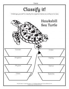 Homeschool Taxonomy Worksheets