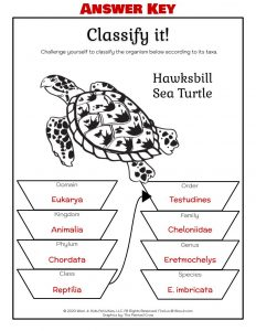 Taxonomy Worksheets - ANSWER KEY
