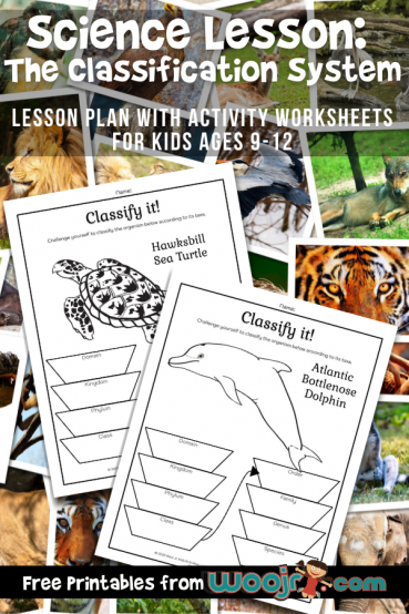 Classification System Science Lesson: Learning Taxonomy