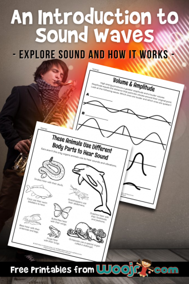 An Introduction to Sound Waves for Kids