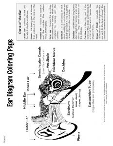 Ear Diagram Coloring Page Sound Waves Learning Unit