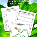 Photosynthesis for Kids: Lesson and Printables