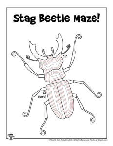 Printable Insect Maze Beetle - ANSWER KEY
