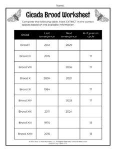 Cicada Brood Worksheet