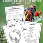 Cicada Emergence Lesson & Activities