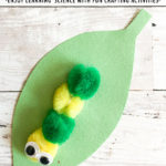 Pom Pom Caterpillar Craft for Kids