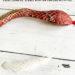 DIY Snakeskin Science Craft